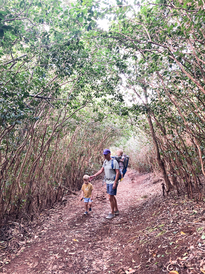 Hiking in Hawaii - Best Hikes in Hawaii - Hiking in Honolulu Hawaii - Best Trails in Hawaii - Hawaii Hiking Trails - Hawaii Hikes Oahu - Aiea Loop Trail Oahu - Kid Friendly Hikes - Hiking with Kids Hawaii