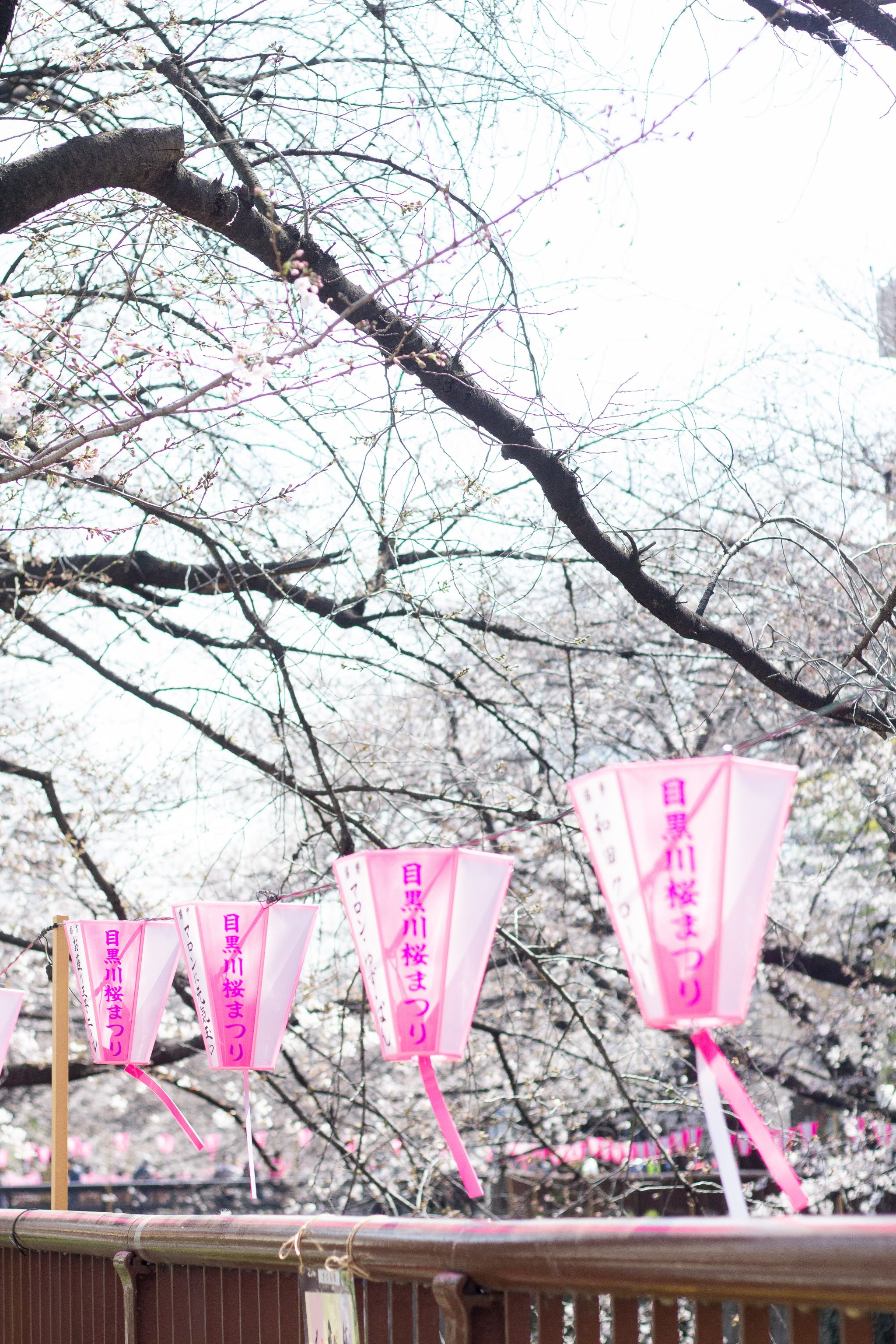 Tokyo - traveling in Tokyo - what to see in Japan - Meguro River Cherry Blossoms