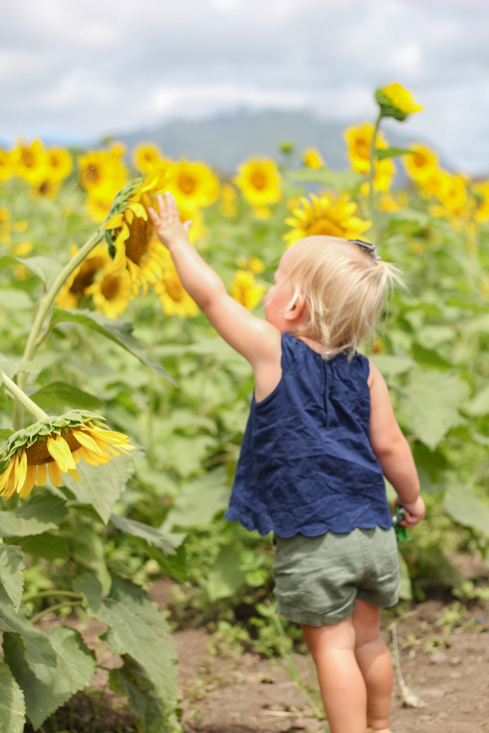 Waimanalo Country Farms - Hawaii - things to do in Hawaii - traveling in Hawaii - hawaii with kids - oahu with kids - sunflower field - sunflowers in hawaii - toddler style - toddler girl style
