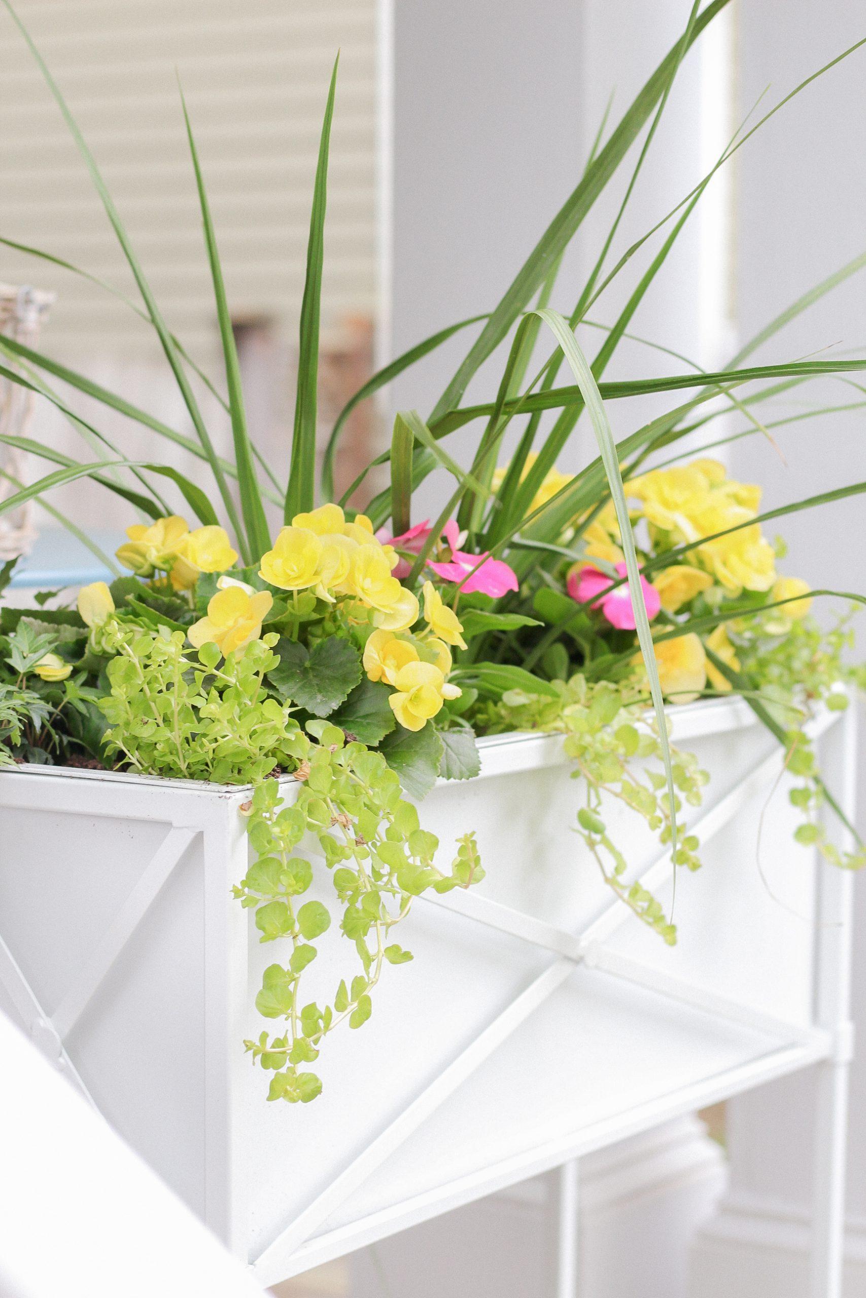 flower window boxes