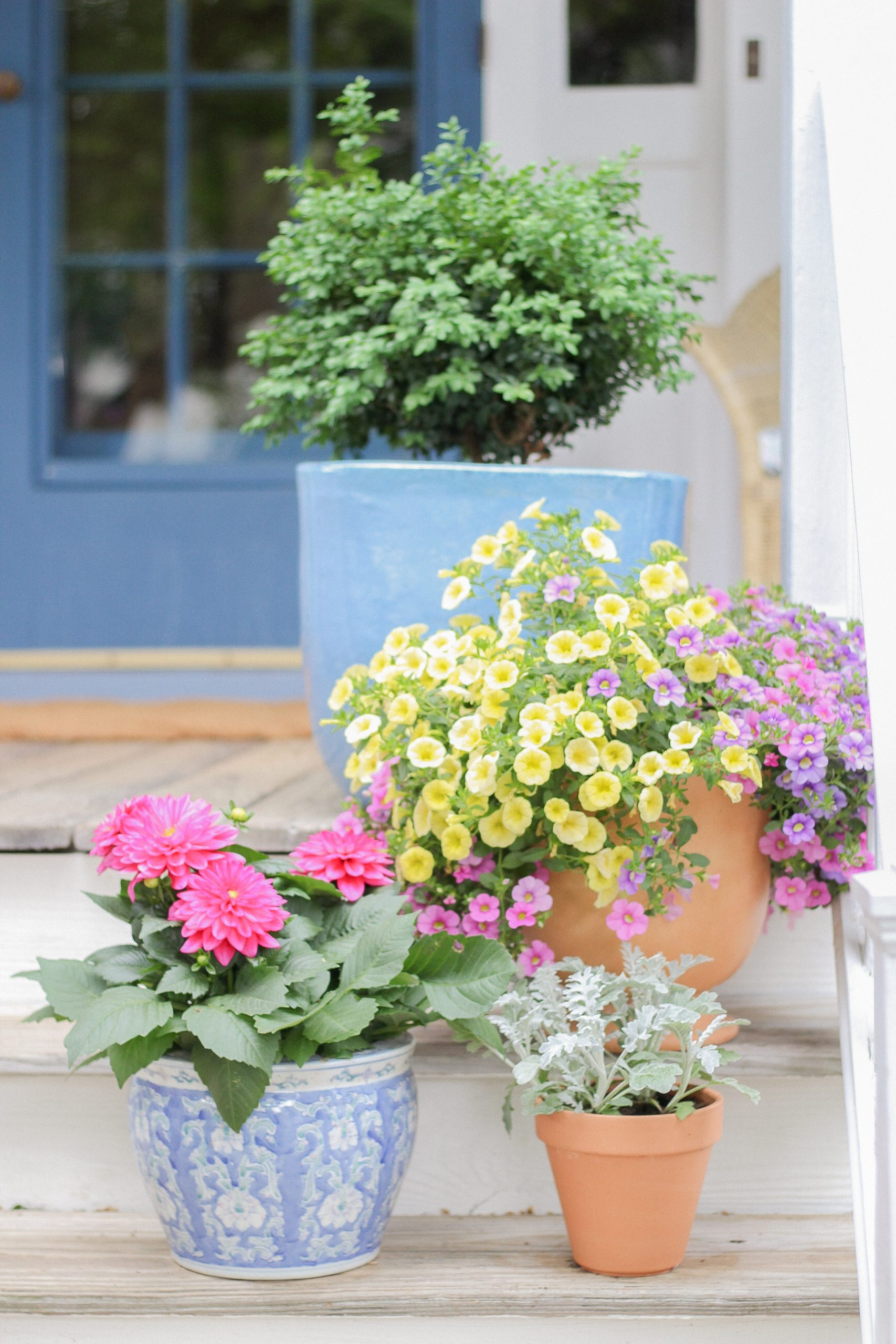 potted plants on porch