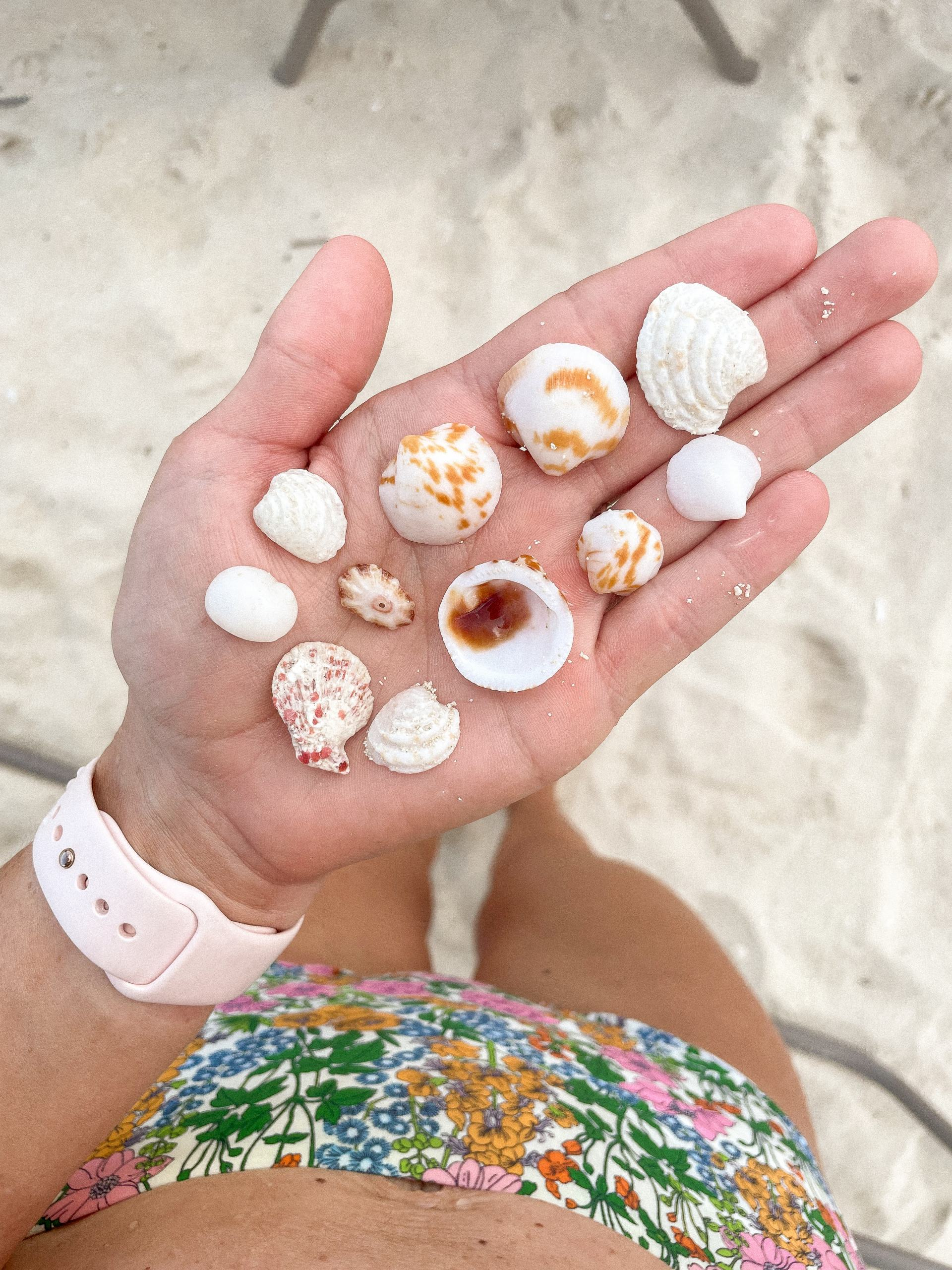 sea shells in bahamas